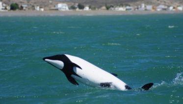 Penguins & Dolphin Watching at Punta Tombo