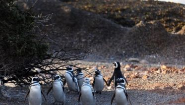 Penguins at Punta Tombo from Puerto Madryn