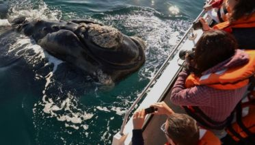 Peninsula Valdes & Whale Watching Tour from Puerto