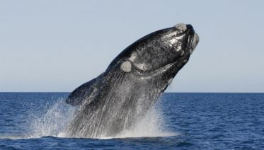 Peninsula Valdes Day Trip with optional Whale Watching