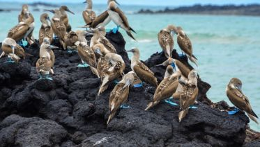 Peru & Galapagos by Yacht