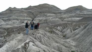 Petrified Forest Day Tour