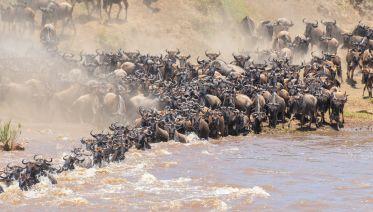 Photographic Safaris- Including Serengeti Migration