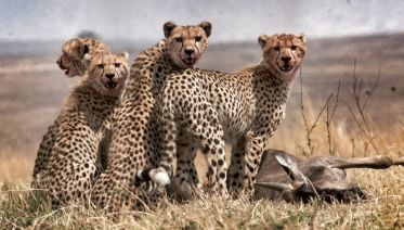 Photographiy Safaris