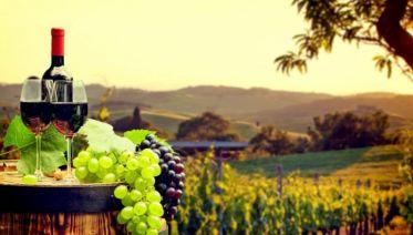 Piedmont Wine Country: Barbaresco to Barolo