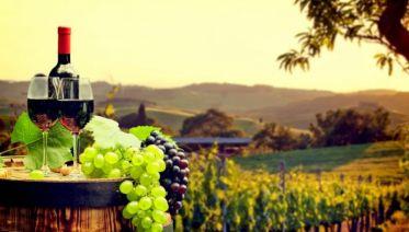 Piedmont Wine Country on Wheels