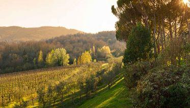 Premium Tuscany