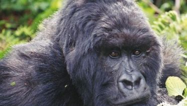Primates And Wildlife Of Uganda