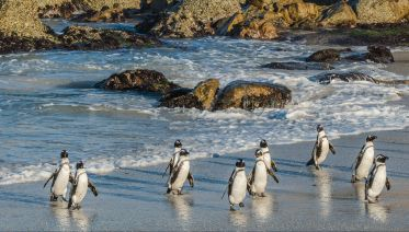 Private Cape Point & Penguins Tour Cape Town