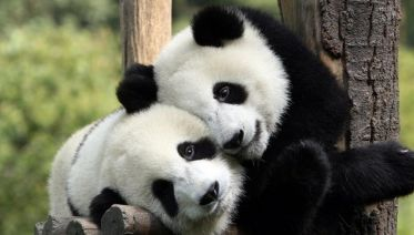 Private Chengdu Panda Tour - Full-Day Adventure