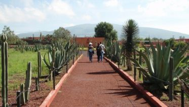 Private Mexico City: Teotihuacan Day-Trip & Dinner with the Locals
