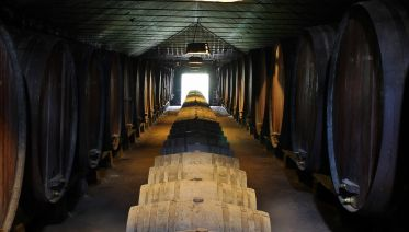 Private Setúbal Region Wine Tasting Tour