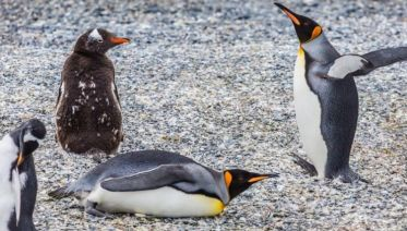 Private Tour Gable Island And Penguin Watching