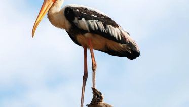 Professional Birding Tour - Free Upgrade To Private Tour Available