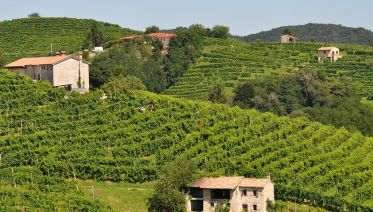 Prosecco Wine-Tasting Tour From Venice