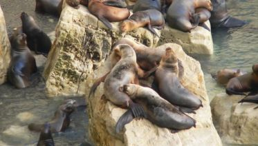 Puerto Madryn City Tour and Sea lions