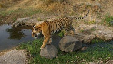 Ranthambore National Park 3D/2N