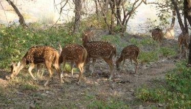 Ranthambore National Park 4D/3N
