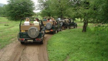 Ranthambore Tiger Experience 5D/4N (from Delhi)
