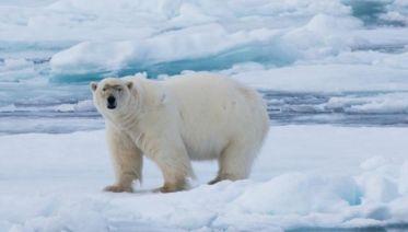 Realm of the Polar Bear in Depth