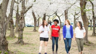 Red, White, and Pink: Cherry Blossoms in the Nation's Capital
