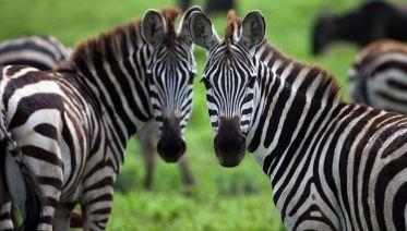 Rwanda, Uganda & Kenya