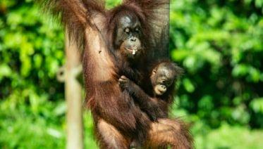 Sarawak, Sabah and Trekking Kinabalu