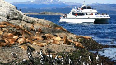 Sea Lions & Birds Island Boat Tour