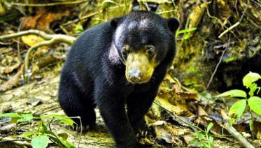 Sepilok Orangutan Centre Day Trip