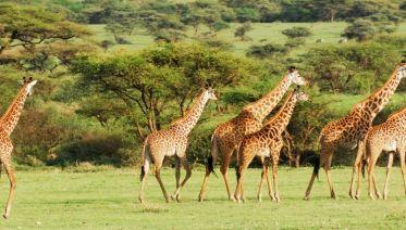 Serengeti & Ngorongoro Safari