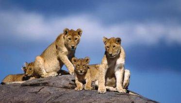 Serengeti Explorer