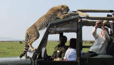 Serengeti Migration 6 Days 5 Nights Lodge Safari