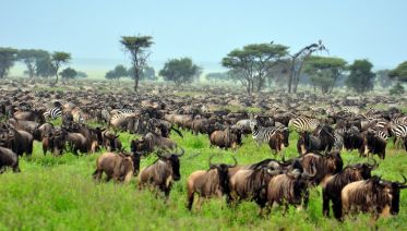 Serengeti Migration Tented Camp Safari