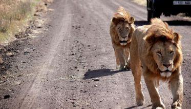 Nairobi To Zanzibar Adventure
