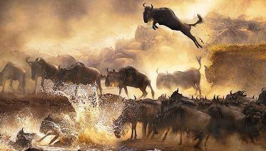 Seven-Day Masai Mara, Nakuru and Amboseli Safari