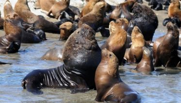 Shore Excursion: Puerto Madryn City Tour and Sea lions