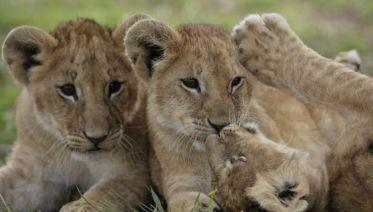 Simba Safari, Sopa Lodges
