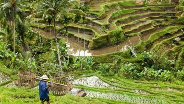 Simply Bali, Private Tour