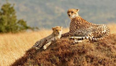 Simply Kenya, Sopa Lodges 5 Days - Private Tour