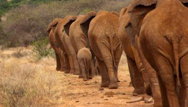 Simply Kenya, Sopa Lodges 6 Days -  Private Tour