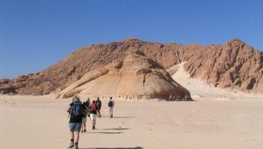 Sinai Desert: Camel Trek And Bedouin Experience