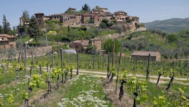 Small Group Chianti and Castles Wine Tour from Siena