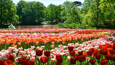Small Group Tour To Keukenhof, Volendam & Windmills