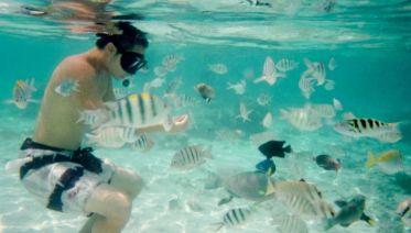 Snorkelling Day Trip