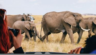 South African Adventure