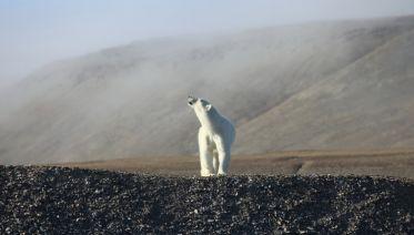 South Baffin Explorer - Art, Culture & Wildlife