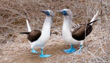 South Galápagos