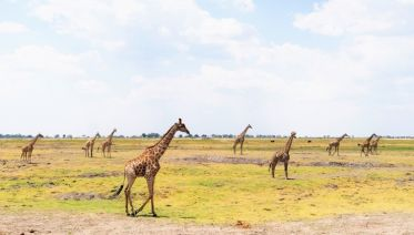 Hwange National Park Tours