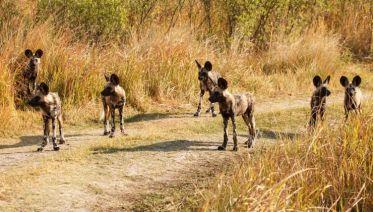 Southern Africa Wildlife & Wine (2019)