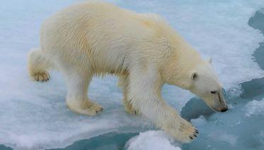 Spitsbergen, East Greenland and Iceland - Northbound